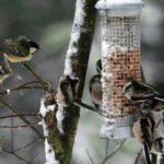 Подкормка птиц на кормушках благоприятно сказывается на разнообразии городской орнитофауны
