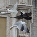 Большой мозг или большое потомство – стратегии выживания птиц в городе