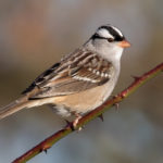 Городские птицы воспользовались тишиной после установления локдауна